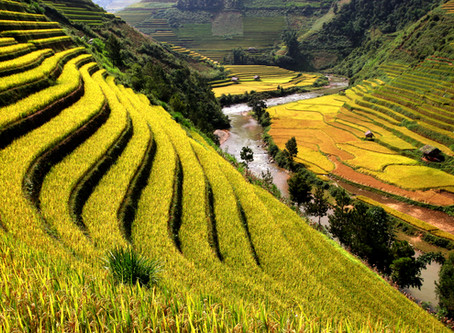 Vietnam world's biggest rice exporters in 2020
