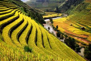 US rice exports to China