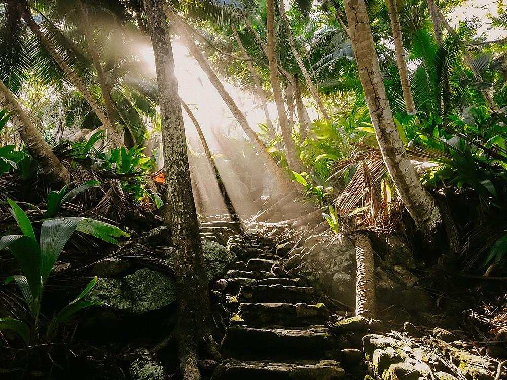 A jungle pathway at Fregate Island Private.