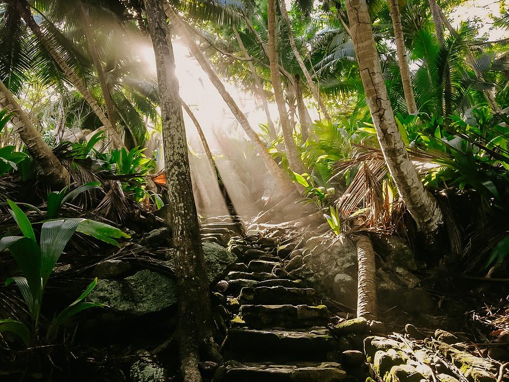 Jungle Trail at Fregate Island