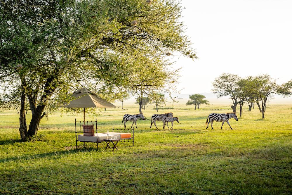Singita - A Blind Safari