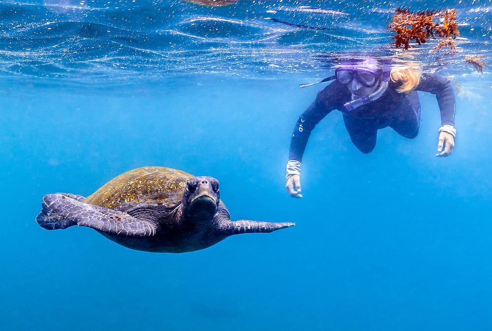 snorkeling turtle sea