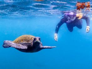 Dive into Eight Scuba & Snorkel Destinations Across the Globe