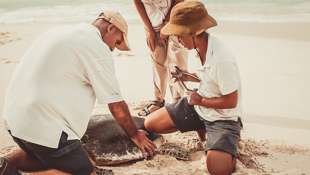 Conservation Initiatives at Fregate Island in the Seychelles.