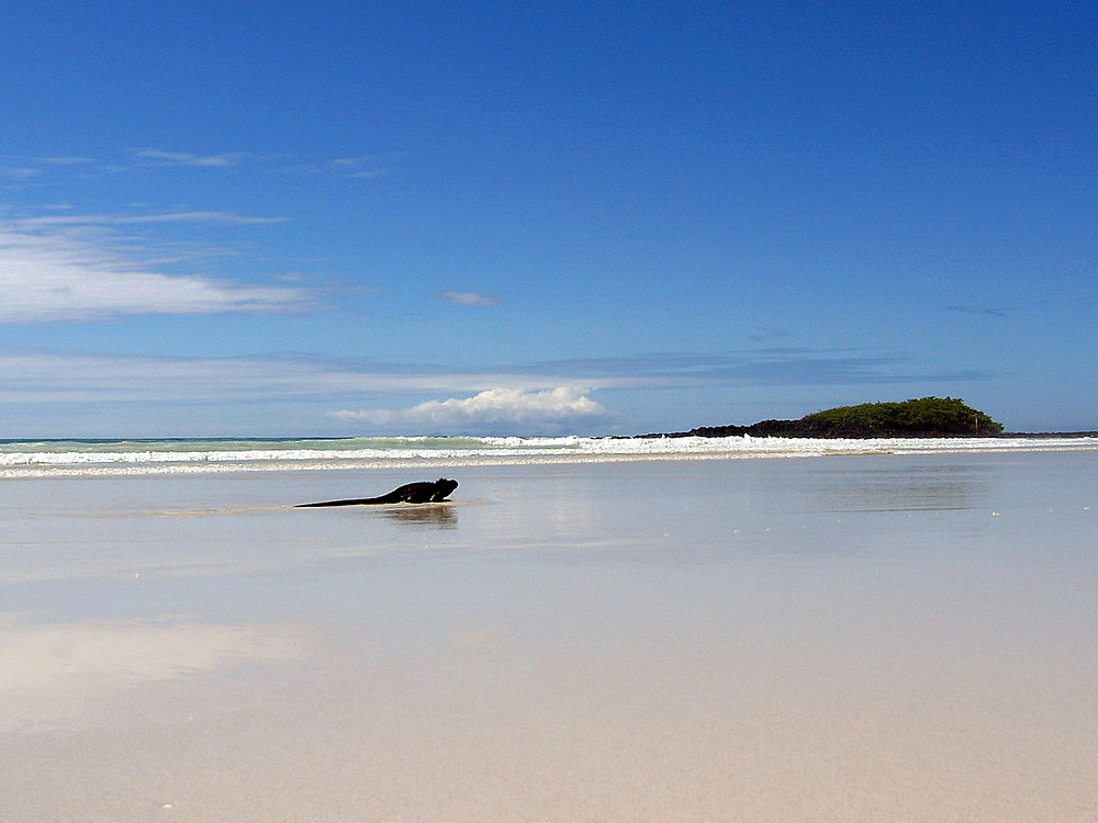 The beach in the Galapagos with Quasar Expeditions.