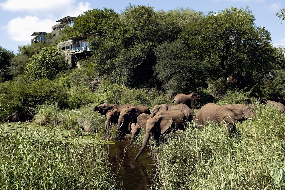 Image of elephants in front of Singita Kruger national Parl Lodge in South Africa