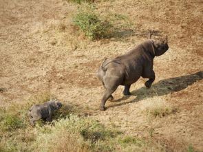 Celebrating World Wildlife Day Around the World