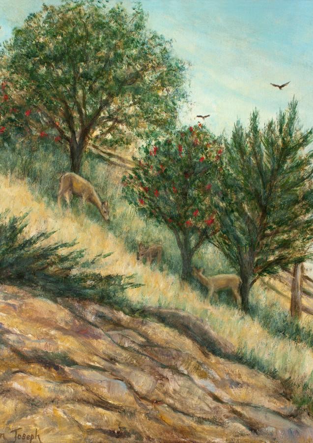 """Deer on the Hillside"" - San Mateo, CA"