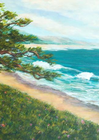 """""""Miramar Cypress"""" - Half Moon Bay"""