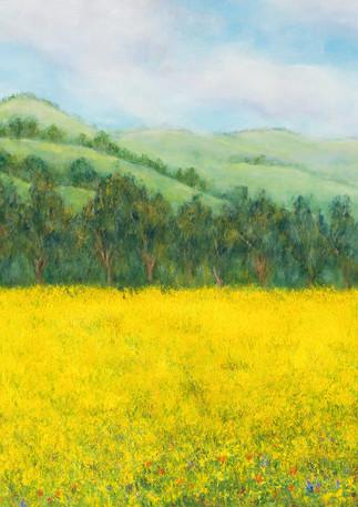 """Field of Gold"" - Half Moon Bay"