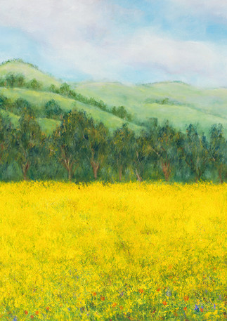 """Field of Gold"" - Half Moon Bay"