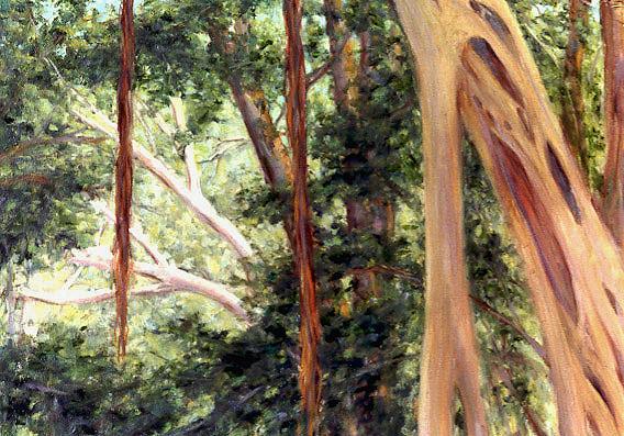 """""""Hawaiian Forest"""" - Tantalus, Oahu, Hawaii"""