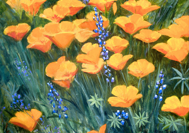 """California Poppies"""