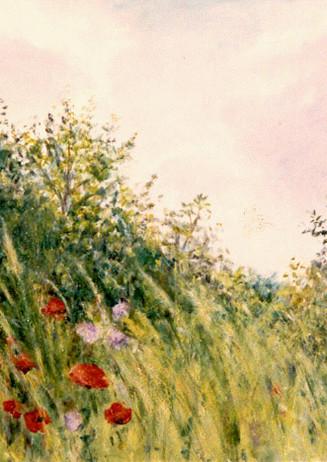 """Poppy Field""- Montigny, France"