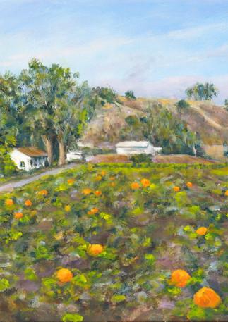 """Frenchmen's Creek Pumpkins"" - Half Moon Bay"
