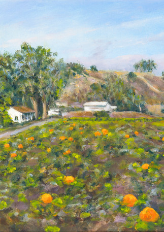 """Frenchmen's Creek Pumpkins"" - Half Moon Bay"