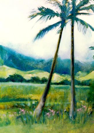 """""""Kauai Palms"""" - Hawaii"""
