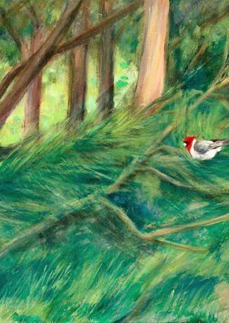 """""""Hawaiian Cardinal"""" - Waimanalo, Oahu, Hawaii"""
