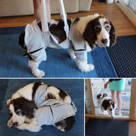 Arthritis comfort and support garment for dogs