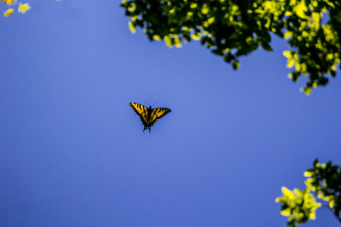 Flying Free (Butterfly)