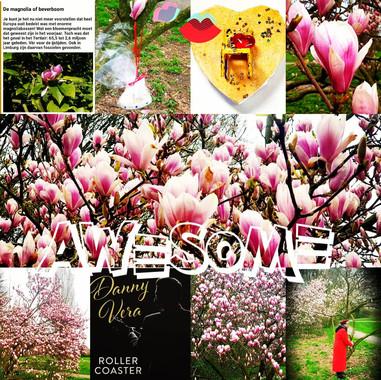 Bij de Bloeiende Magnolia`s in lelystad....