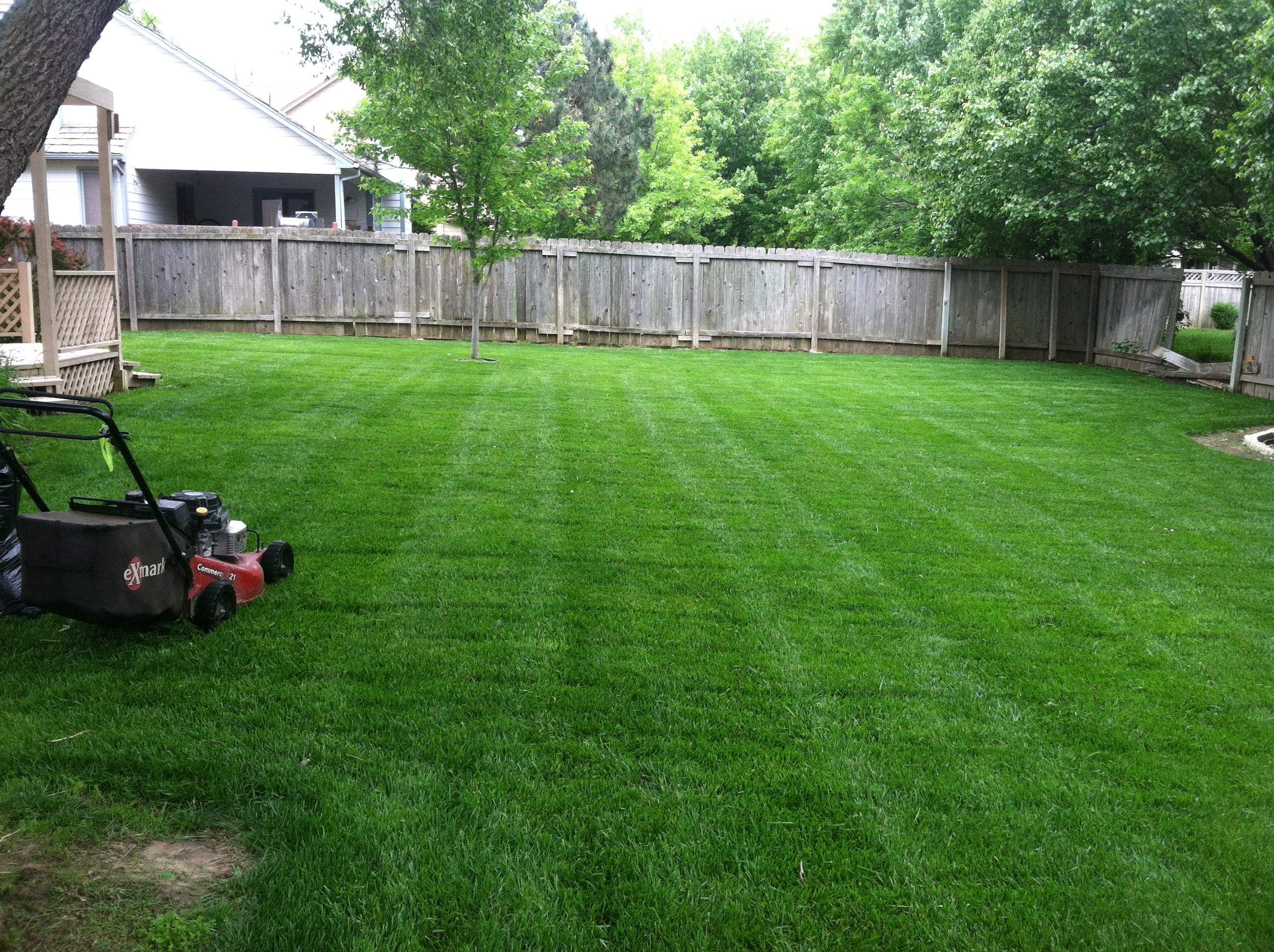 Mowing Back Yard