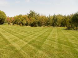 Lawn Stripes 8