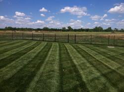 Lawn Stripes 1