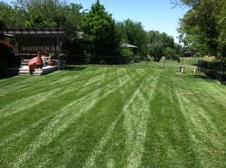 Lawn Stripes 9