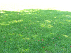 Overseeding results