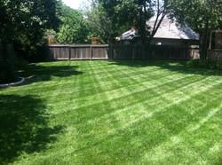 Lawn Stripes 4