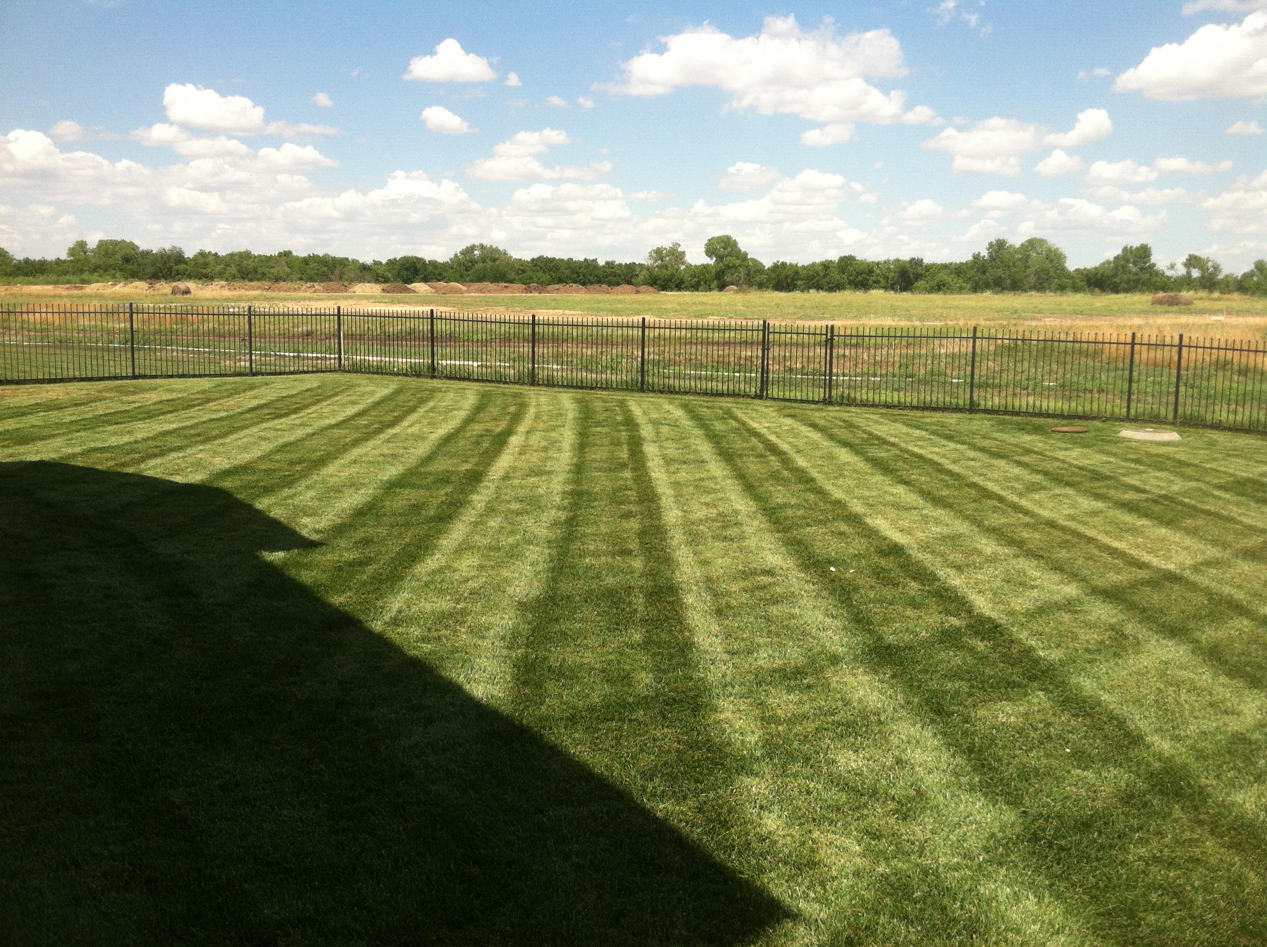 Lawn Stripes 5