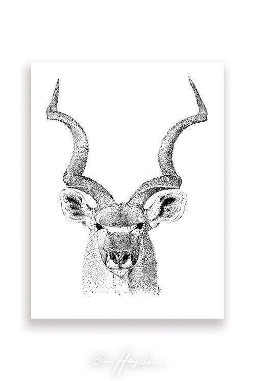 Kudu Card