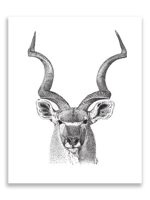 Kudu Print