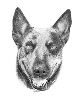 Sample custom pet portait of a dog by Arlington, Virginia artist Brie Hayden