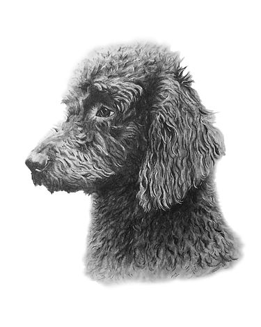 Sample custom pet portrait of a dog by Northern Virginia artist Brie Hayden