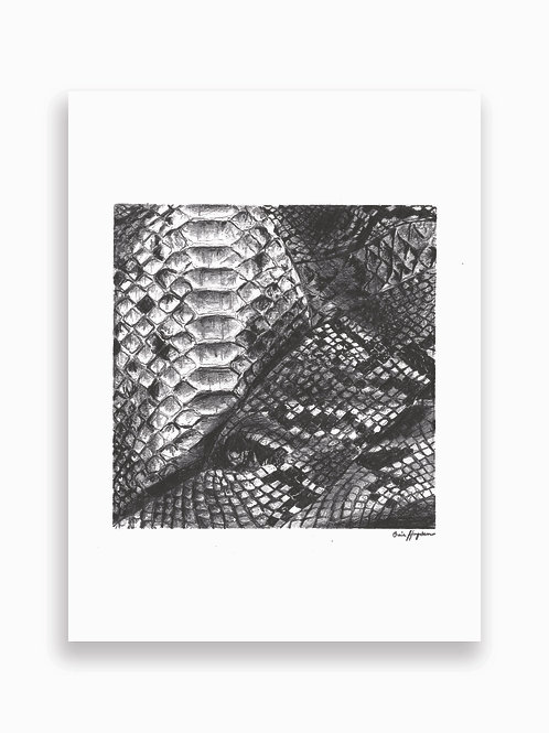 Snakeskin Card