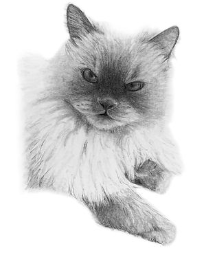 Sample custom pet portrait of a cat by Northern Virginia artist Brie Hayden