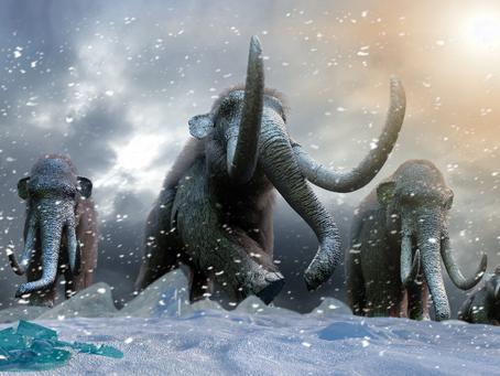 Kuinka mammutti olisi voinut selvitä sukupuutosta?