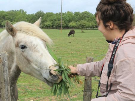 L'enfant et le cheval blanc