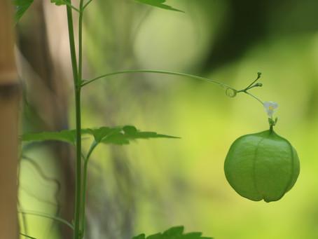 un vert frais