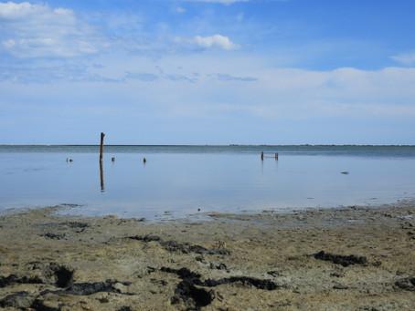 L'étang de Vic un matin...