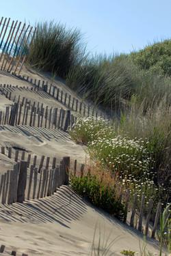 dune espiguette052011 (2)