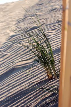 dune espiguette052011