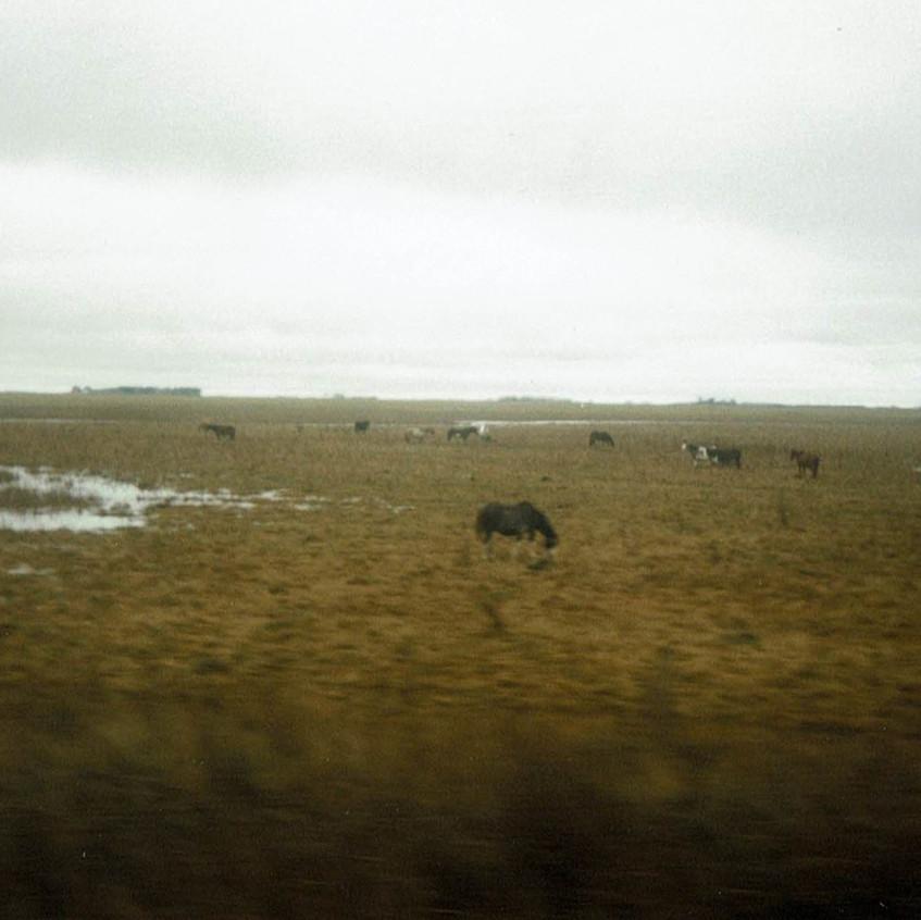 Caballos en la Pampa argentina. 4