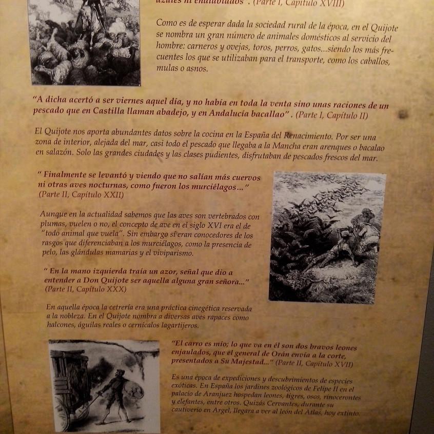 Cervantes. Ciencia en el Quijote 14