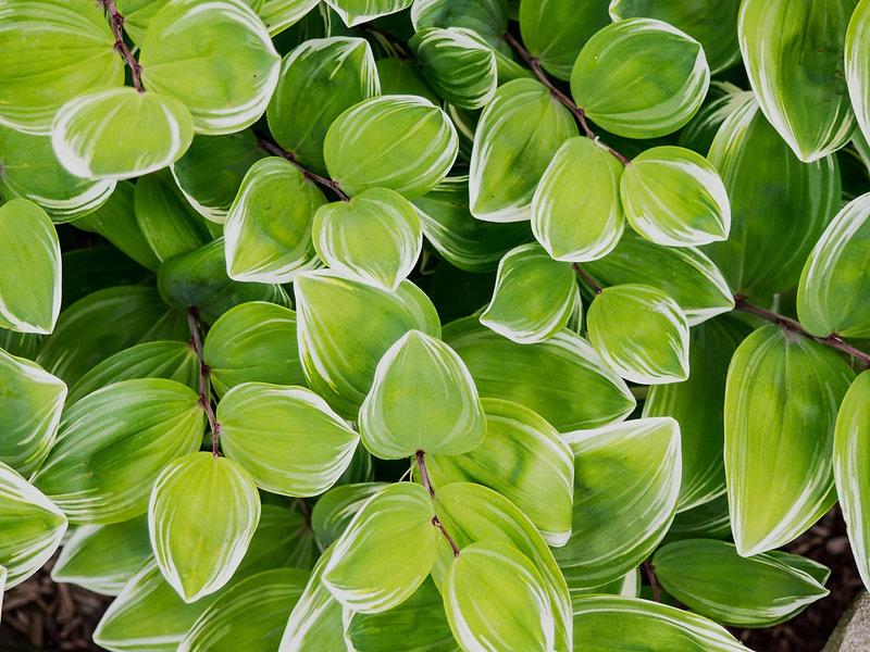 Leaves (1).jpg