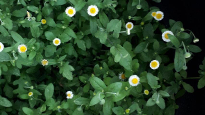 melyna-valle-OgFBGsTSB9Y-unsplash_edited