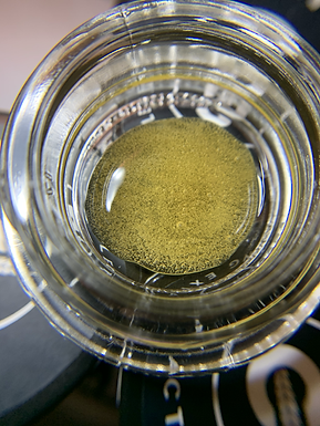 """Heady Halos: """"Out-Sourcing"""" for Solventless Hash Supports Legacy Market Farms"""