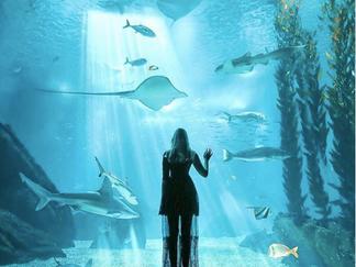 Visiter l'Aquarium de Lisbonne en 2019